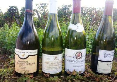 """Clos de bourgogne, ateliers découverte """"vigne et vin"""" - 4"""