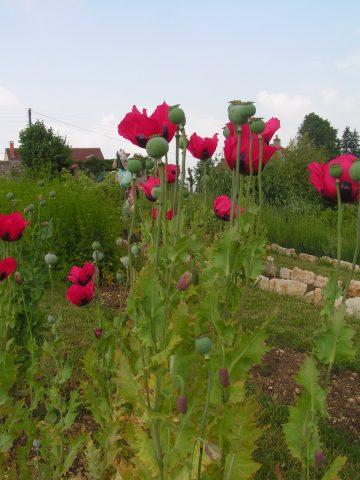 Rendez-vous aux jardins en Côte-d'Or – édition 2021 - 2