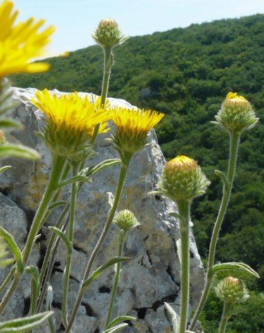 Réserve Naturelle de la Combe Lavaux – Jean Roland - 11