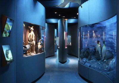 Jardin des Sciences – Muséum - 11