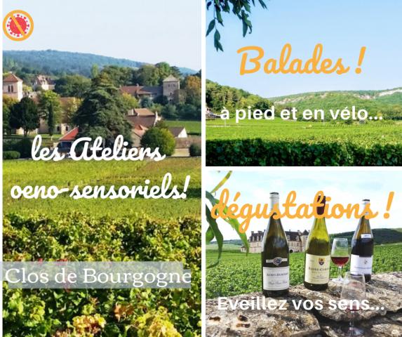 """Clos de bourgogne, ateliers découverte """"vigne et vin"""" - 0"""