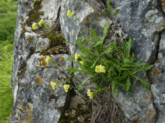 Réserve Naturelle de la Combe Lavaux – Jean Roland - 9
