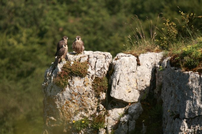 Réserve Naturelle de la Combe Lavaux – Jean Roland - 8
