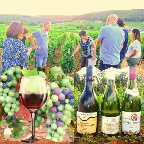 """Clos de bourgogne, ateliers découverte """"vigne et vin"""" - 1"""